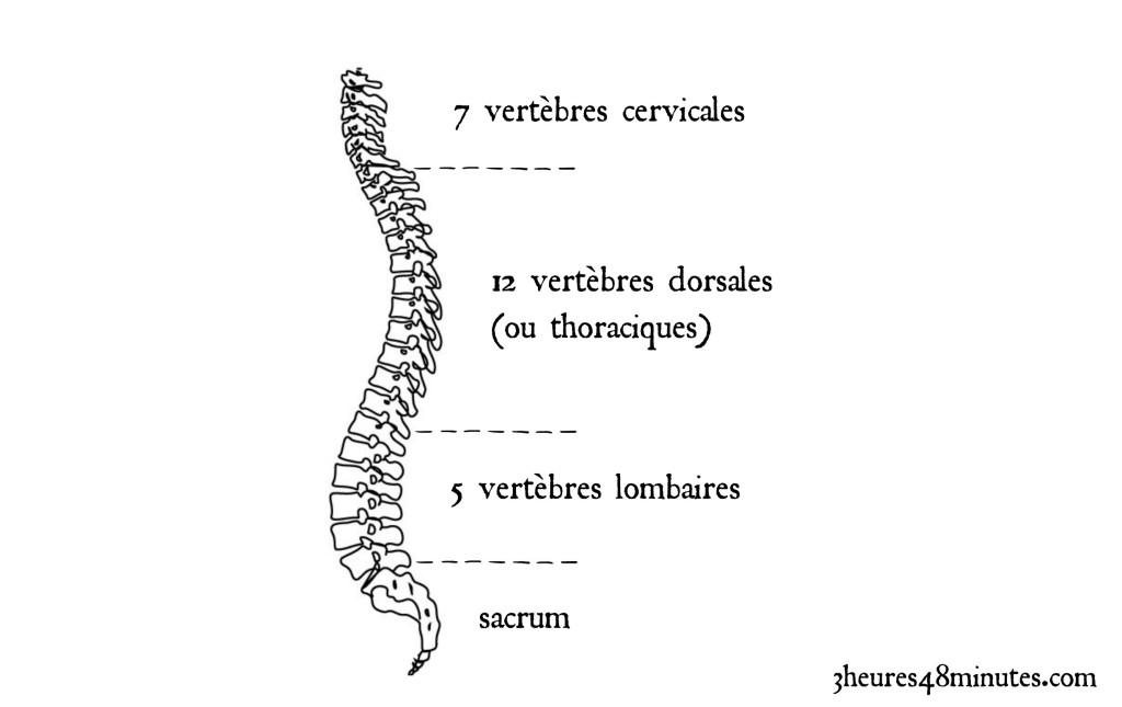vertebres