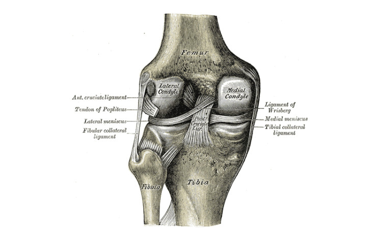 The-Knee-Bones-Connected-to