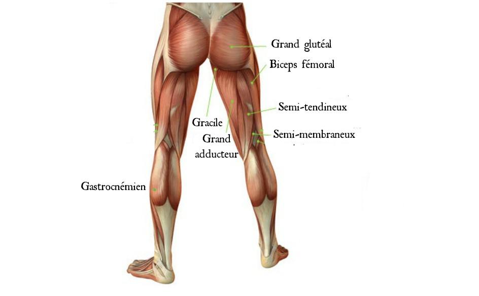 Arriere de la jambe